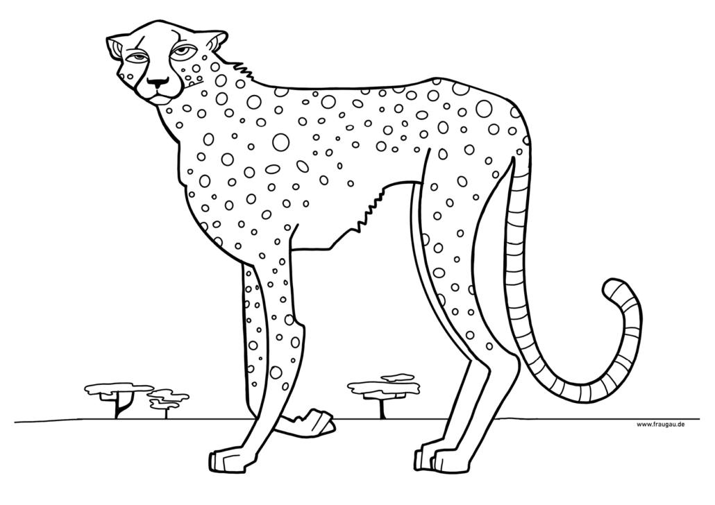 ausmalbilder gepard | kinder ausmalbilder